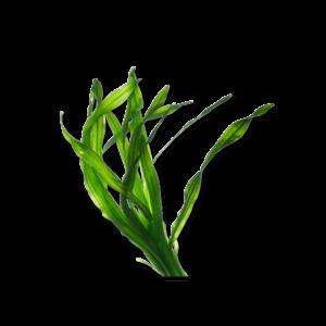 Pawmeal Organic Kelp
