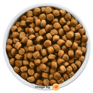 Bowl Of Kibbles