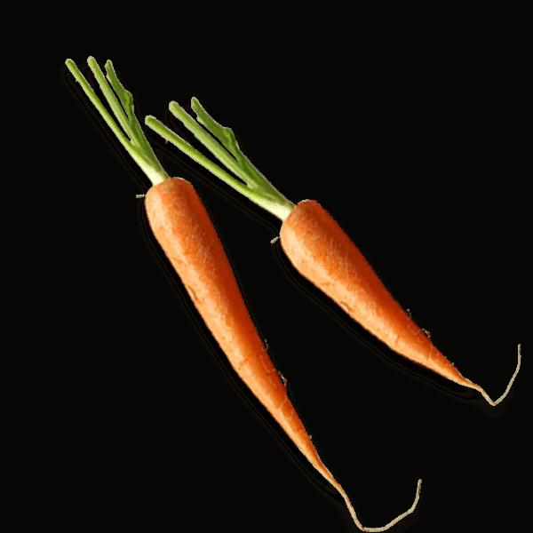 Carrots 600x600
