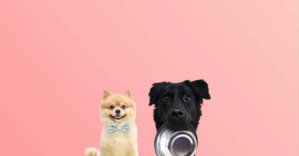 Pawmeal Subscription Plan Fresh Cooked Dog Food
