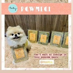 Nobelle the Pomeranian