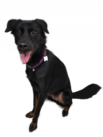 Rara Pawmeal Dog