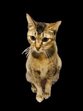 Skippy Pawmeal Cat